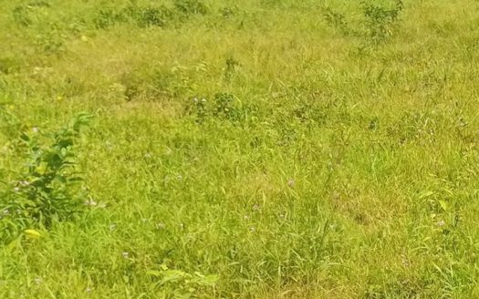2719sqm land Amuwo Odofin