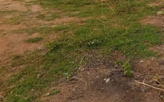 650Sqm Land For Sale In Magodo Phase 1